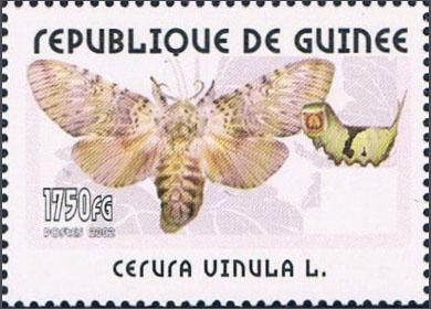 Unusual moths