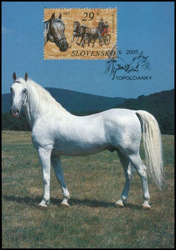 Analogická pohľadnica Ochrana prírody: Kone - Lipicanský kôň