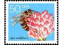 Flora in thematic philately - Natural wonder of clover