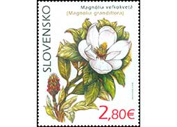 Nature protection: Botanical Garden UPJS in Kosice - Magnolia grandiflora