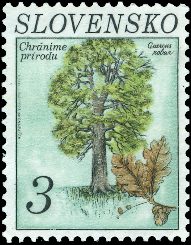 Postage Stamp Nature protection: English oak (Quercus robur) (joint issue with the Czech Republic)