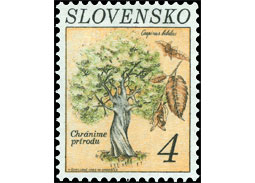 Nature protection: European Hornbeam (Carpinus betulus) (joint issue with the Czech Republic)