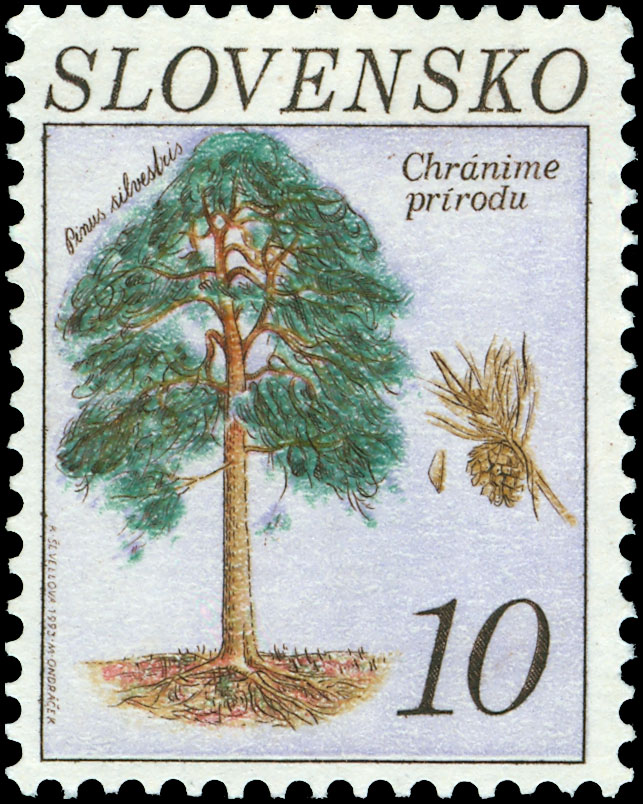 Postage Stamp Nature protection: Scots pine (Pinus sylvestris L.) (joint issue with the Czech Republic)