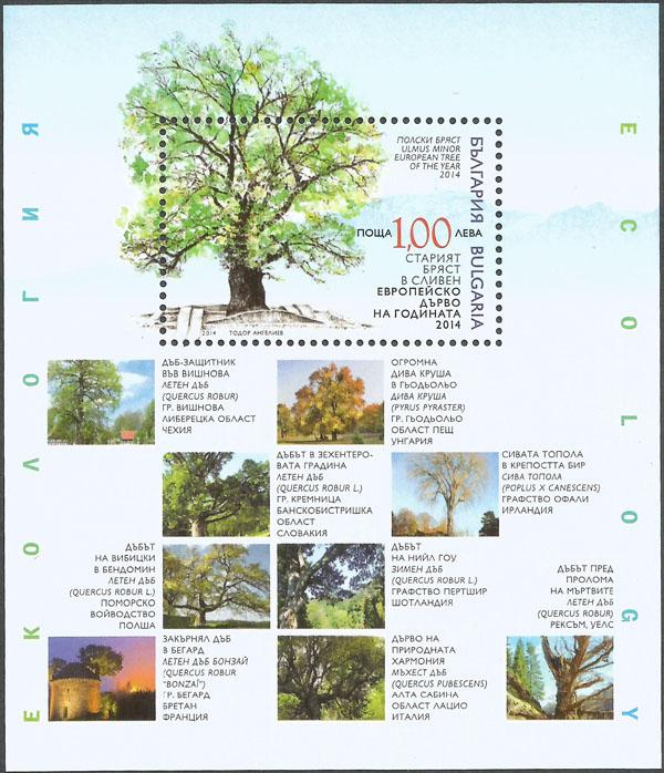 Slovaciká - Bulharsko - Európsky strom roku 2014 - Dub letný zo Slovenska